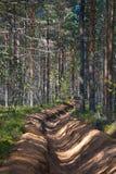 Μεγάλη αμμώδης τάφρος σε μια τάφρο δασικής πυρκαγιάς πεύκων Στοκ φωτογραφίες με δικαίωμα ελεύθερης χρήσης
