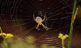 Μεγάλη αράχνη στον ιστό αράχνης στοκ φωτογραφία