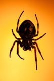 μεγάλη αράχνη Στοκ φωτογραφίες με δικαίωμα ελεύθερης χρήσης