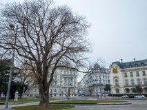 Μεγάλη εικονική παράσταση πόλης δέντρων στη χειμερινή εποχή, Βιέννη Αυστρία Στοκ εικόνες με δικαίωμα ελεύθερης χρήσης