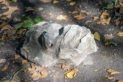 Μεγάλη ενδιαφέρουσα μορφή πετρών που βρίσκεται στο έδαφος μεταξύ Στοκ Φωτογραφία
