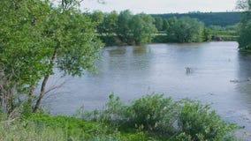 Μεγάλη θέση για την αλιεία στον ποταμό με τις πράσινες τράπεζες φιλμ μικρού μήκους