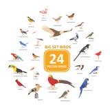 Μεγάλη καθορισμένη διανυσματική απεικόνιση πουλιών διανυσματική απεικόνιση