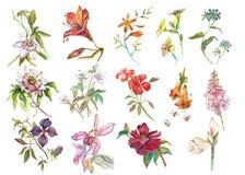 Μεγάλη καθορισμένη συλλογή Watercolor με τα στοιχεία φυτών - φύλλο, λουλούδια Βοτανική απεικόνιση που απομονώνεται στο άσπρο υπόβ απεικόνιση αποθεμάτων
