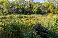 Μεγάλη λίμνη στο δάσος Lobau Στοκ φωτογραφίες με δικαίωμα ελεύθερης χρήσης