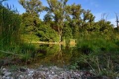 Μεγάλη λίμνη στο δάσος Lobau Στοκ Εικόνες