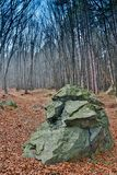 Μεγάλη πέτρα που καλύπτεται με το βρύο στα δασικά δέντρα και το μεγάλο βράχο στο ξύλο Στοκ Εικόνες