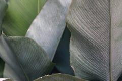 Μεγάλη πράσινη τροπική σύσταση άδειας στον κήπο στοκ φωτογραφίες