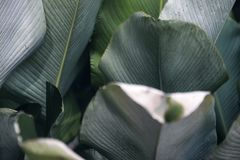 Μεγάλη πράσινη τροπική σύσταση άδειας στον κήπο στοκ εικόνες
