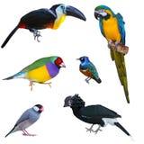 μεγάλη συλλογή πουλιών Στοκ φωτογραφία με δικαίωμα ελεύθερης χρήσης