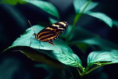Μεγάλη τροπική συνεδρίαση πεταλούδων στην πράσινη χλόη Στοκ Φωτογραφία