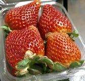 μεγάλη φράουλα στοκ εικόνα