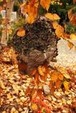 Μεγάλη φωλιά σφηκών στους κλάδους δέντρων στοκ εικόνα