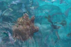 μεγάλη χελώνα θάλασσας στοκ εικόνες