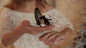 Μεγάλη όμορφη κίτρινη πεταλούδα σε ετοιμότητα μιας γυναίκας φιλμ μικρού μήκους
