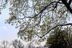 Μεγάλοι κλάδοι δέντρων στο πάρκο που καλύπτει τον ουρανό την ηλιόλουστη ημέρα στοκ φωτογραφίες