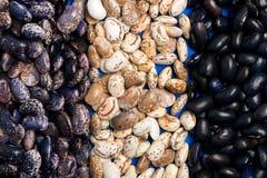 Μεγάλοι τρεις τύποι σιταριών φασολιών, λοβός φασολιών, πολλή σύσταση φασολιών στοκ εικόνα