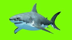 Μεγάλος άσπρος καρχαρίας Megalodon σε ένα πράσινο υπόβαθρο Δύο άνευ ραφής περιτυλίχτηκαν τρισδιάστατες ζωτικότητες 4K ελεύθερη απεικόνιση δικαιώματος