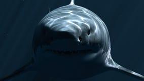 Μεγάλος άσπρος καρχαρίας Megalodon σε σκοτεινό βάθος τρισδιάστατη ζωτικότητα 4K απεικόνιση αποθεμάτων