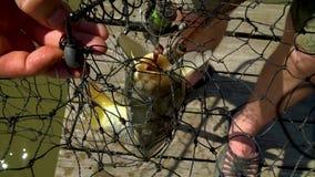 Μεγάλος αλιεία στην αλιεία του εξοπλισμού Αλιεία του γάντζου από το στόμα ενός πιασμένου ψαριού φιλμ μικρού μήκους