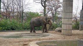 Μεγάλος γκρίζος ελέφαντας στο ζωολογικό κήπο του Βερολίνου φιλμ μικρού μήκους