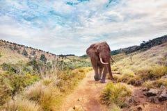 Μεγάλος ελέφαντας σε ένα τοπίο Στοκ Φωτογραφίες