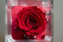 Μεγάλος, κόκκινος αυξήθηκε εικόνα δώρων ανθών Στοκ Φωτογραφίες