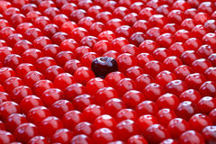 μεγάλος κόκκινος μικρός & Στοκ Εικόνες