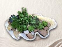 Μεγάλος λευκός καλλιεργητής κοχυλιών με τις succulent εγκαταστάσεις στοκ εικόνες