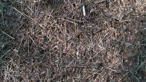 Μεγάλος λόφος μυρμηγκιών στο πυκνό δάσος απόθεμα βίντεο