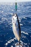 μεγάλος μεσογειακός τόνος παιχνιδιού αλιείας Στοκ Φωτογραφία