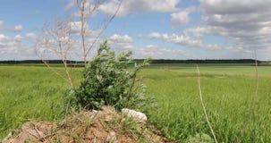 Μεγάλος πράσινος τομέας με τα δέντρα και τη βλάστηση απόθεμα βίντεο