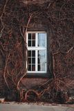 Μεγάλος τουβλότοιχος το ψηλό άσπρο παράθυρο που περιβάλλεται με με το pla φύσης Στοκ Εικόνες