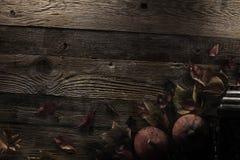 μεγάλος φωτεινός Ιστός αραχνών σκιών μυστηρίου σεληνόφωτου φωτοστεφάνου ευελιξιών φλογών ρίψης καλλιεργητικός εκτεταμένος παράξεν Στοκ Εικόνες