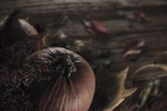 μεγάλος φωτεινός Ιστός αραχνών σκιών μυστηρίου σεληνόφωτου φωτοστεφάνου ευελιξιών φλογών ρίψης καλλιεργητικός εκτεταμένος παράξεν Στοκ Φωτογραφίες