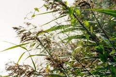 Μεγάλος όμορφος ιστός αράχνης με τις πτώσεις δροσιάς στοκ εικόνα