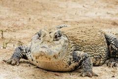 μεγάλος cayman στοκ φωτογραφία
