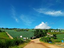 Μεγάλο αγρόκτημα λάχανων στο βερκέλιο σκαφών Phu Thap Boek Phu βουνών και ουρανού Στοκ εικόνες με δικαίωμα ελεύθερης χρήσης