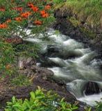μεγάλο βράζοντας νησί hilo της Χαβάης κοντά στα δοχεία Στοκ εικόνες με δικαίωμα ελεύθερης χρήσης