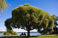 μεγάλο δέντρο ζευγών κάτω Στοκ Εικόνα