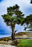 Μεγάλο δέντρο κυπαρισσιών στην παραλία μοναστηριών Στοκ φωτογραφίες με δικαίωμα ελεύθερης χρήσης