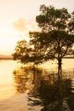 Μεγάλο δέντρο μαγγροβίων που υπερασπίζεται μόνο τη θάλασσα στο ηλιοβασίλεμα, φανταστικός ουρανός στο θερινό σούρουπο στοκ φωτογραφία