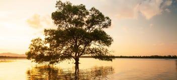 Μεγάλο δέντρο μαγγροβίων που υπερασπίζεται μόνο τη θάλασσα στο ηλιοβασίλεμα, φανταστικός ουρανός στο θερινό σούρουπο στοκ εικόνες