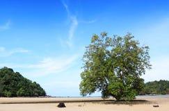 μεγάλο δέντρο παραλιών Στοκ Εικόνες