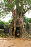 μεγάλο δέντρο ρίζας Στοκ Εικόνες