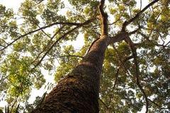Μεγάλο δέντρο σε ένα άσπρο υπόβαθρο στοκ φωτογραφίες με δικαίωμα ελεύθερης χρήσης