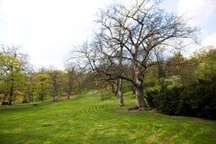 μεγάλο δέντρο τοπίων Στοκ Εικόνες