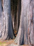 μεγάλο δέντρο Στοκ εικόνα με δικαίωμα ελεύθερης χρήσης