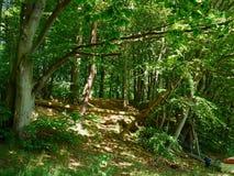 Μεγάλο δασικό πράσινο ξύλο φύσης δέντρων κήπων στοκ φωτογραφία με δικαίωμα ελεύθερης χρήσης