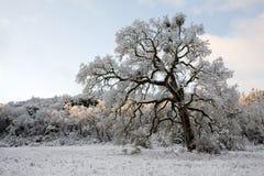 μεγάλο δρύινο παλαιό χιόνι στοκ εικόνα